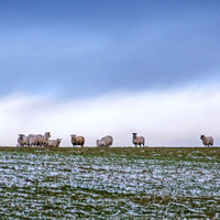 131 - Winter Woolies